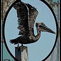 Pelican Paradise by Karen Sheltrown