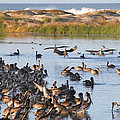 Pelican Party by Bob and Jan Shriner