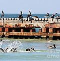Pelican Pier by Carol Groenen