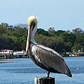 Pelican Point by Aimee L Maher ALM GALLERY