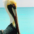 Pelican Profile And Water by Heather Kirk