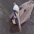Pelican by Robert Floyd