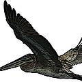 Pelican Selection by Toula Mavridou-Messer