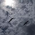 Pelican Sky by J  Leigh