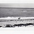 Pelican Stroll