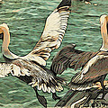 Pelican Take Off Two by Alice Gipson