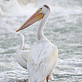 Pelican Watch by Dwayne Schnell