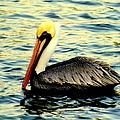 Pelican Waters by Karen Wiles