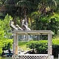 Pelicans' Fish Prep Station by R B Harper