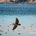 Pelicans Flocking On The Ocean by Toula Mavridou-Messer