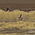 Pelicans In The Surf by Tommy Anderson
