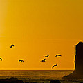 Pelicans On The Wing II by Greg Reed