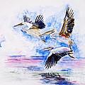 Pelicans by Zaira Dzhaubaeva