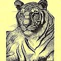 Pen And Ink Drawing Of Royal Tiger by Mario Perez