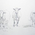 Pencil Drawing Of Three Cows by Mike Jory