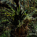 Penciled Air Plant by Nancy L Marshall