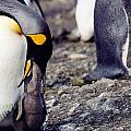 Penguin And Baby by Marida Lin