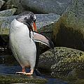 Penguin Ballet...