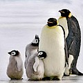 Penguin Family by Bruce Nutting