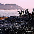 Penguins Mountain Boulders Beach Cape Town by Charl Bruwer