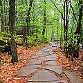 Pennsylvania Hiking Trail by Carol VanDyke