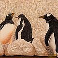 Penquin Family by Susan Cliett