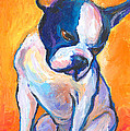 Pensive Boston Terrier Dog  by Svetlana Novikova