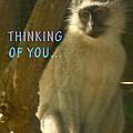 Pensive Monkey  by Karen Zuk Rosenblatt
