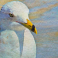 Pensive Seagull by Alice Gipson
