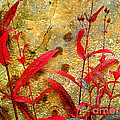 Penstemon Abstract 4 by Mike Nellums