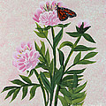 Peonies And Monarch Butterfly by Barbara Griffin