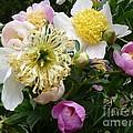 Peonies Bouquet by Lingfai Leung
