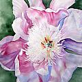 Peony At Dusk by Joann Perry