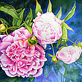 Peony by H Cooper