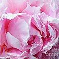 Peony Punch  by Brian Boyle
