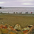 People Lined Up To Catch Capelin On The Shore Of Middle Cove-nl by Ruth Hager