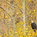 Perched In The Colors Of Autumn by Tim Grams