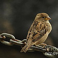 Perched by Margaret Collins