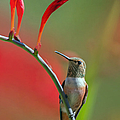 Perched On Crocosmia by Angie Vogel