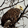 Perched On High by Thomas Young