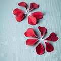 Perfect Petals by Jan Bickerton