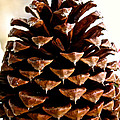 Perfect Pinecone by Susan Herber