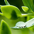 Perfect Raindrop by Cynthia Woods