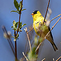 Perfect Shade Of Yellow by Lori Tambakis