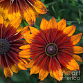 Perfection In Red And Orange by Anita Miller