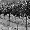 Perissos Winery by Kristina Deane