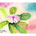 Periwinkle by C Sitton