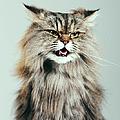 Persian Cat Portrait by Sensorspot