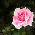 Personally Pink by Matthew Seufer