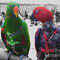 Pet Parrots In A Cafe by Nina Silver